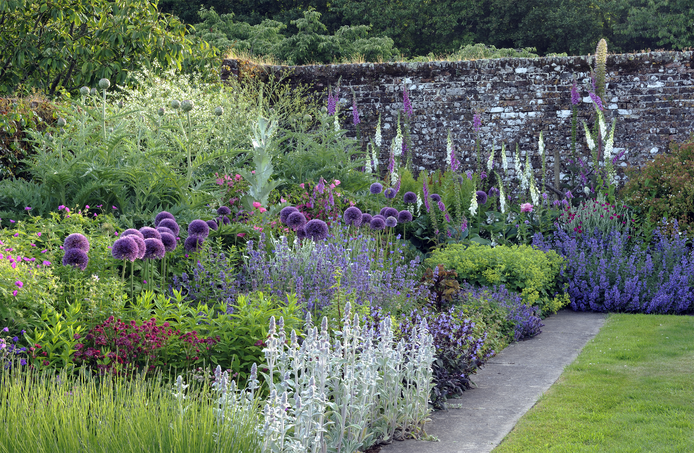 Walled garden with aliums at Mothecombe House, Devon