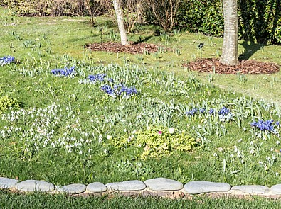 Spotlight on snowdrops: The Old Vicarage