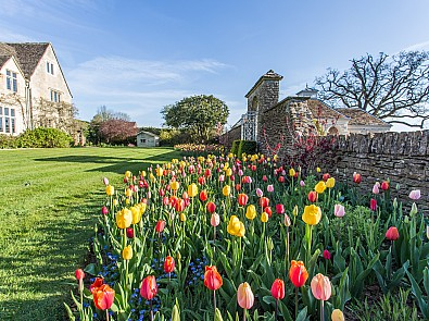 Tulips – One of the most spectacular seasonal displays of the year