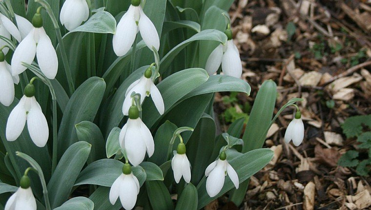 Snowdrop Festival brings first signs of Spring
