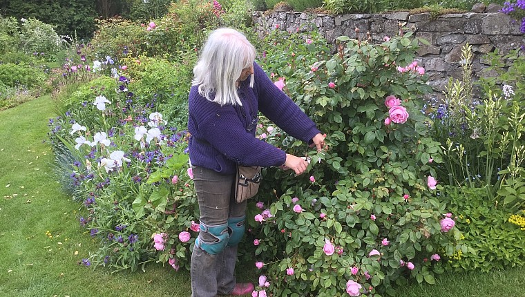 The experiences of a garden owner: You should have been here last week …