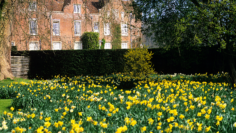 Visit a Daffodil Garden in March and April