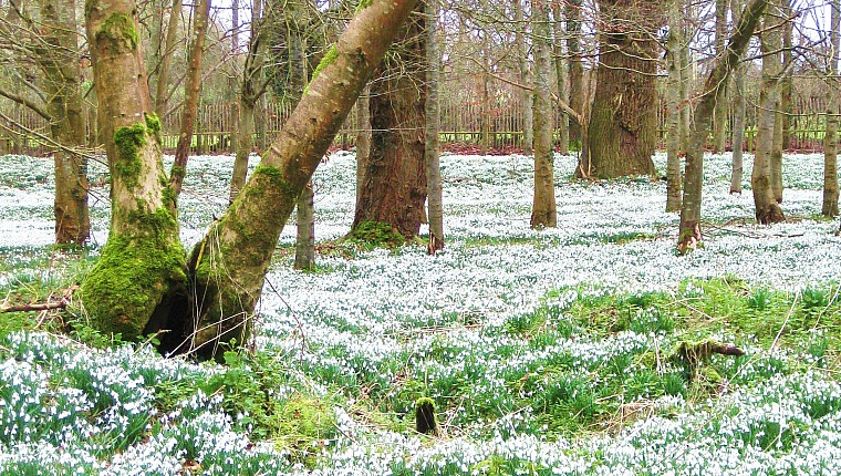 Welford Park opens as part of Snowdrop Festival
