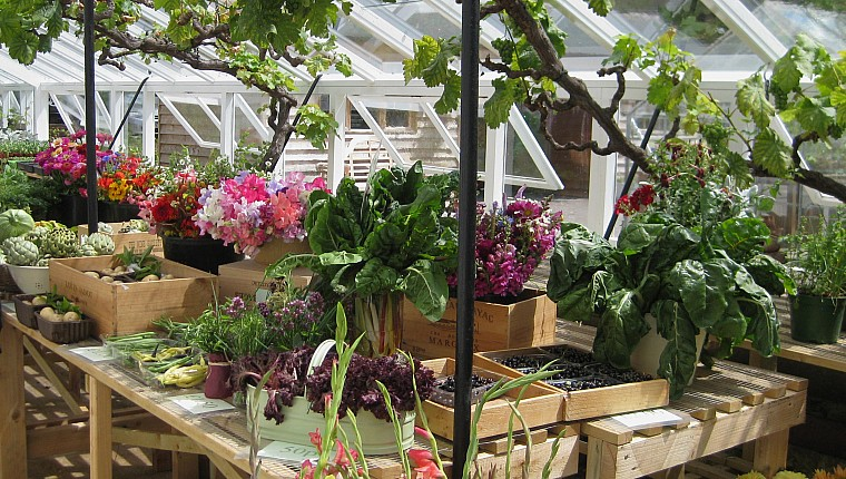 Why reducing VAT on plants would be a real boost for people, their health, and the environment