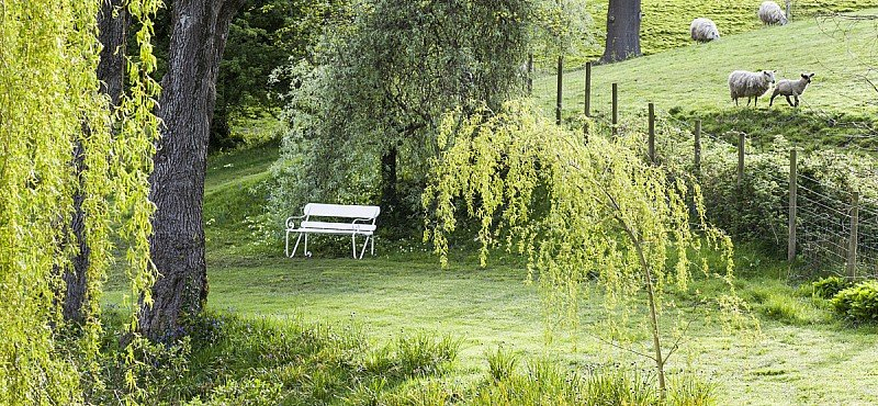 Wellbeing in the garden: tips from a therapist