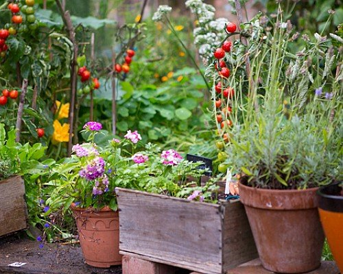 Gardens and health