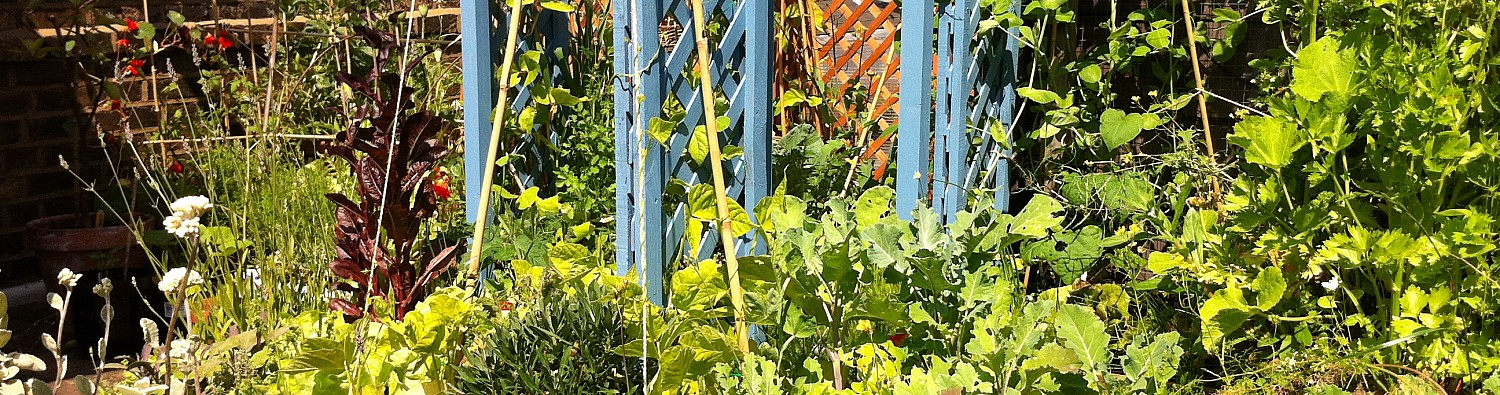 Rooftopvegplot 15 July – SOLD OUT