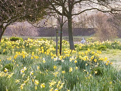 Top tips for your garden in March